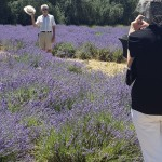 Mrs. Burrows taking a photograph of Mr. Burrows out in the lavender field.