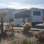If the roads are open, you will surely find the Carlotta bus with every seat taken by residents eager to explore sights unseen. These plants are called Yucca Trees and they are are seen throughout the hundreds of acres across Joshua Tree National Park.